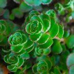 """Succulent Plants–Foolproof """"Gardening""""!"""