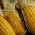 Grilled or Boiled Corn on the Cob